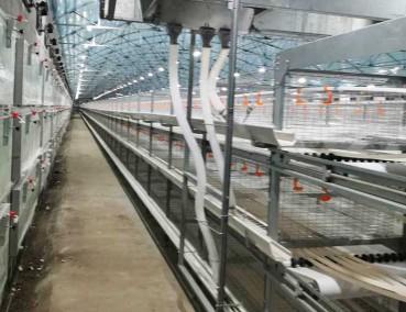 阶梯式肉鸡养殖设备